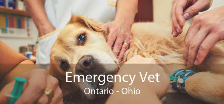 Emergency Vet Ontario - Ohio