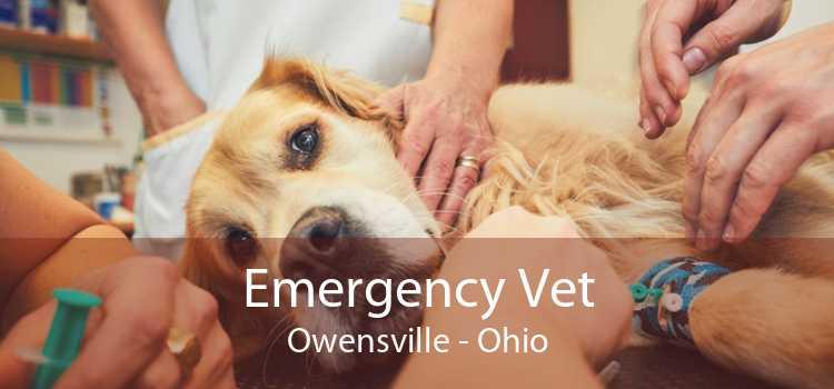 Emergency Vet Owensville - Ohio