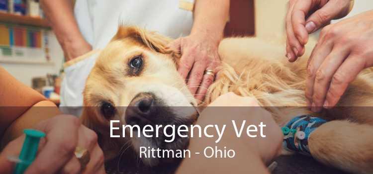 Emergency Vet Rittman - Ohio
