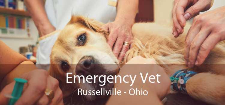 Emergency Vet Russellville - Ohio