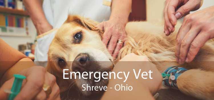 Emergency Vet Shreve - Ohio