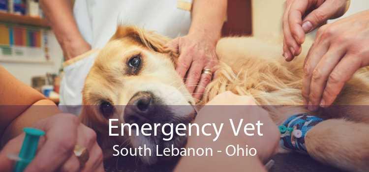 Emergency Vet South Lebanon - Ohio