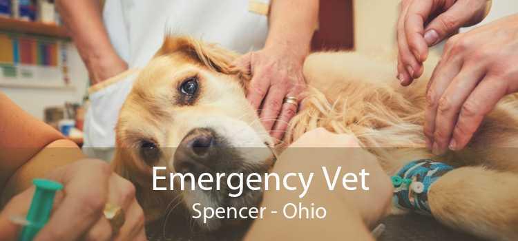 Emergency Vet Spencer - Ohio