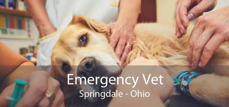 Emergency Vet Springdale - Ohio