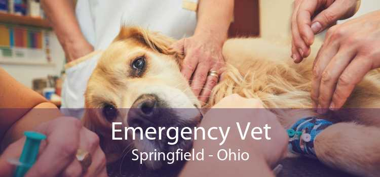 Emergency Vet Springfield - Ohio