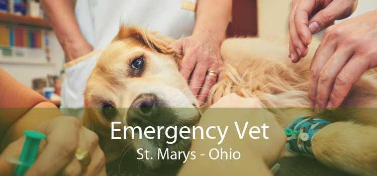 Emergency Vet St. Marys - Ohio