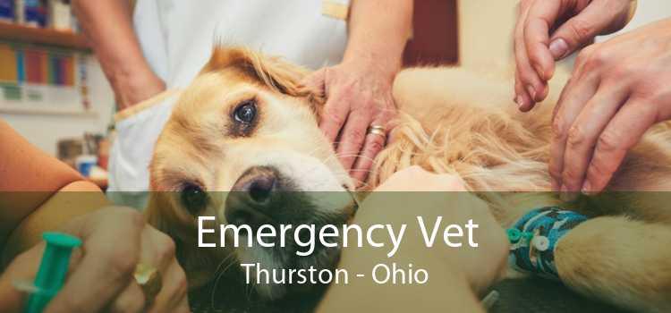 Emergency Vet Thurston - Ohio