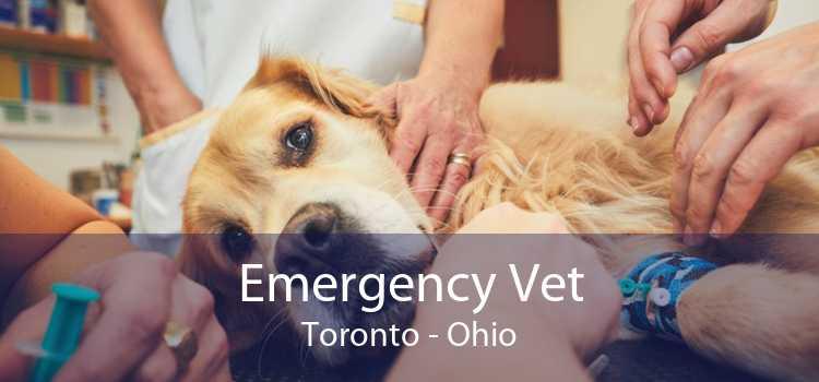 Emergency Vet Toronto - Ohio