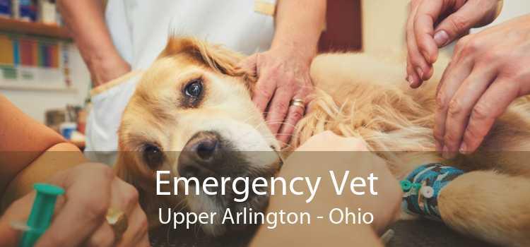 Emergency Vet Upper Arlington - Ohio