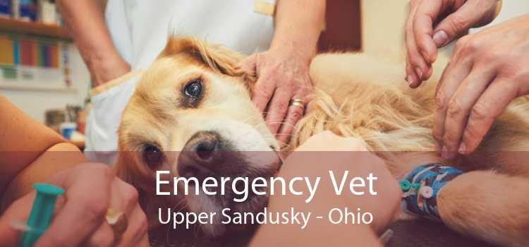 Emergency Vet Upper Sandusky - Ohio