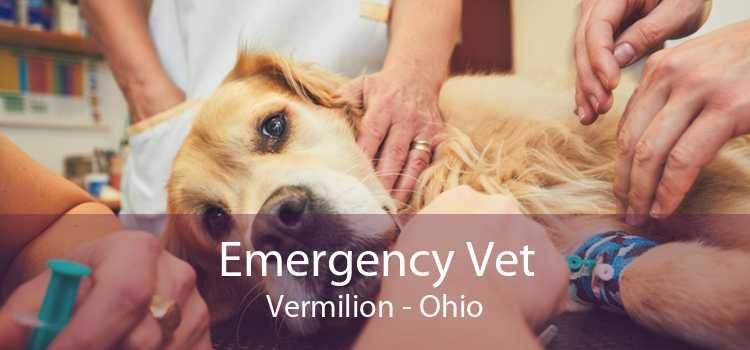 Emergency Vet Vermilion - Ohio