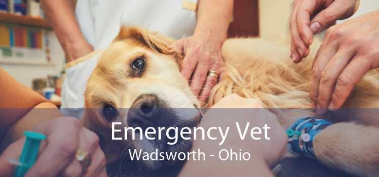 Emergency Vet Wadsworth - Ohio