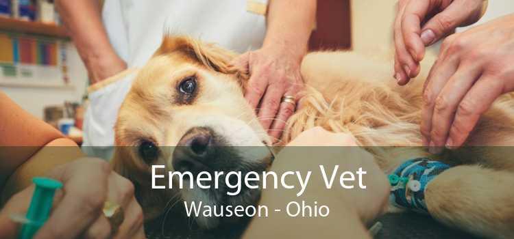 Emergency Vet Wauseon - Ohio