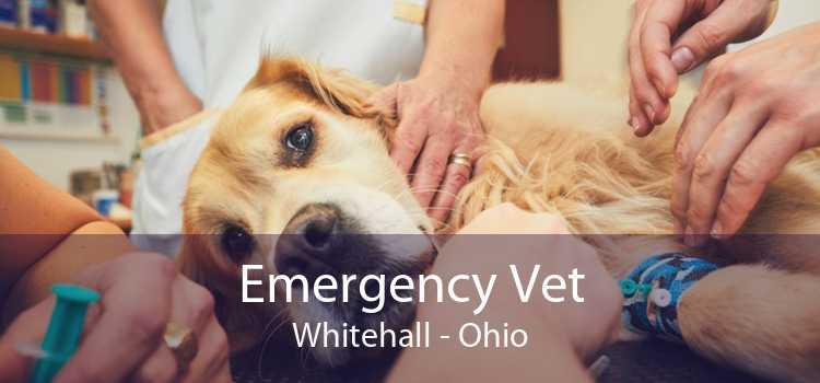 Emergency Vet Whitehall - Ohio
