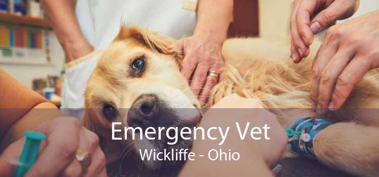 Emergency Vet Wickliffe - Ohio