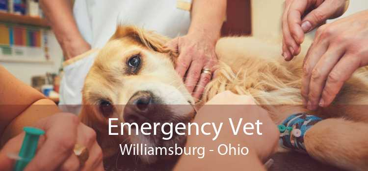 Emergency Vet Williamsburg - Ohio