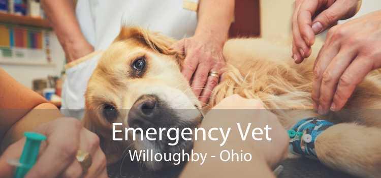 Emergency Vet Willoughby - Ohio