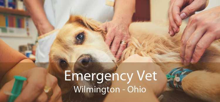 Emergency Vet Wilmington - Ohio