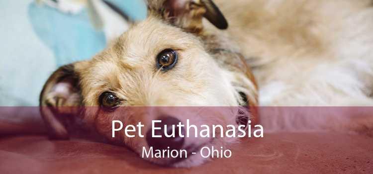 Pet Euthanasia Marion - Ohio