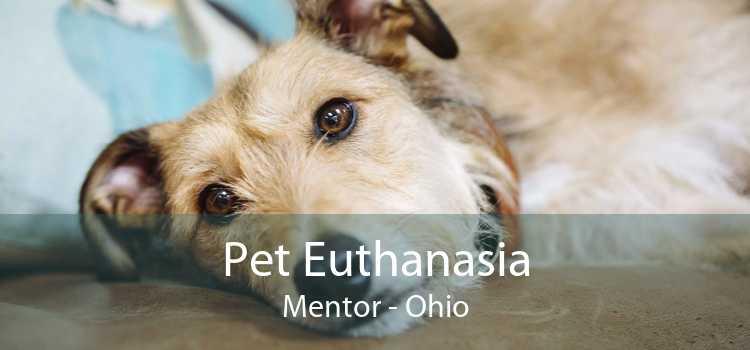 Pet Euthanasia Mentor - Ohio
