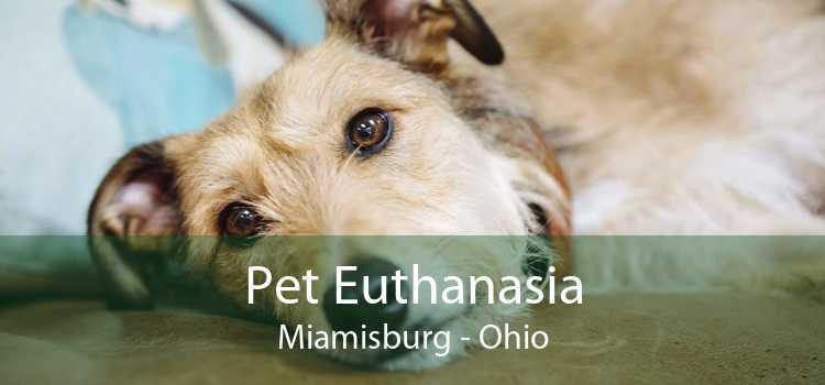 Pet Euthanasia Miamisburg - Ohio