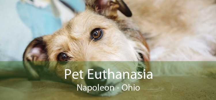 Pet Euthanasia Napoleon - Ohio
