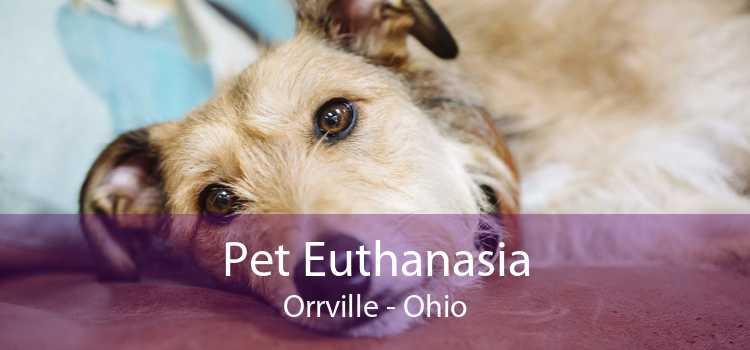 Pet Euthanasia Orrville - Ohio