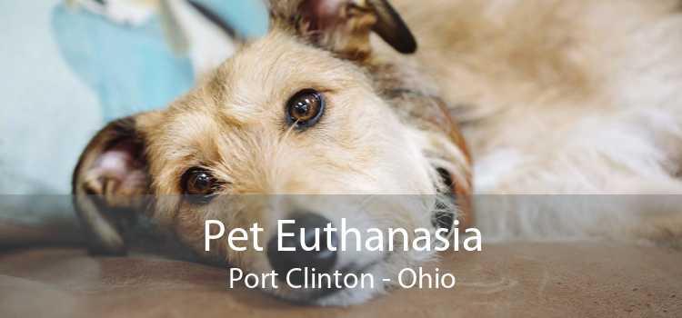 Pet Euthanasia Port Clinton - Ohio