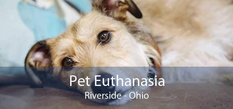 Pet Euthanasia Riverside - Ohio