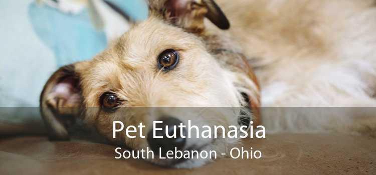 Pet Euthanasia South Lebanon - Ohio