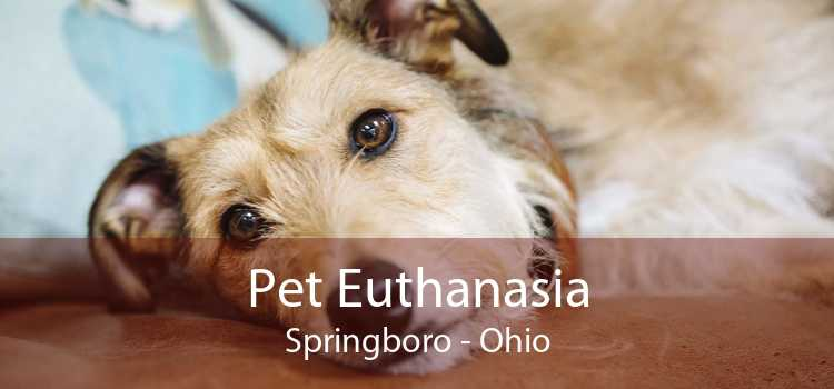 Pet Euthanasia Springboro - Ohio
