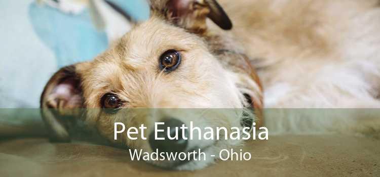 Pet Euthanasia Wadsworth - Ohio