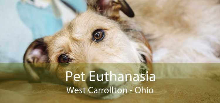 Pet Euthanasia West Carrollton - Ohio