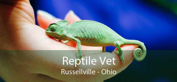 Reptile Vet Russellville - Ohio