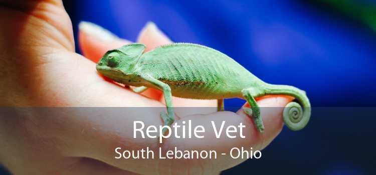 Reptile Vet South Lebanon - Ohio