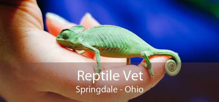 Reptile Vet Springdale - Ohio