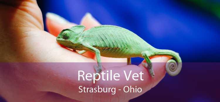 Reptile Vet Strasburg - Ohio
