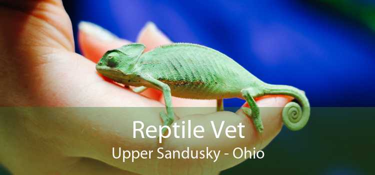 Reptile Vet Upper Sandusky - Ohio