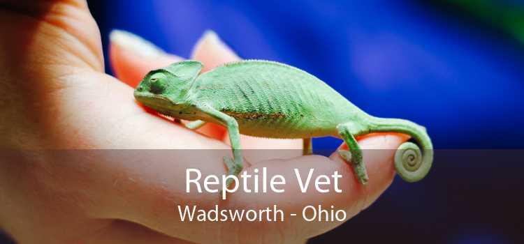 Reptile Vet Wadsworth - Ohio