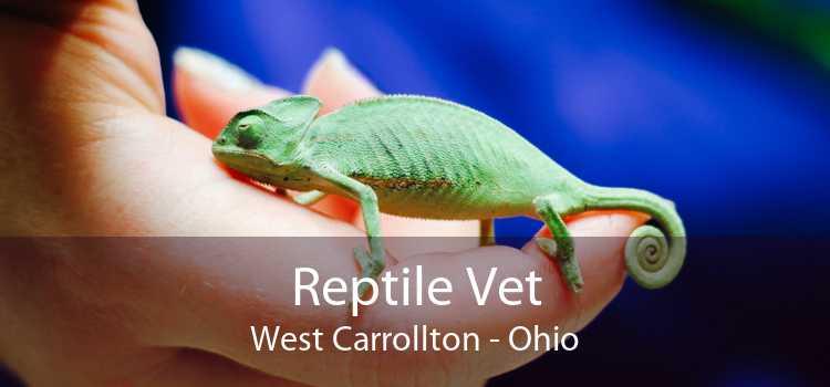 Reptile Vet West Carrollton - Ohio