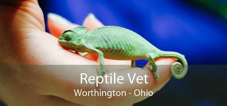 Reptile Vet Worthington - Ohio
