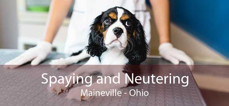 Spaying and Neutering Maineville - Ohio