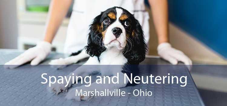 Spaying and Neutering Marshallville - Ohio