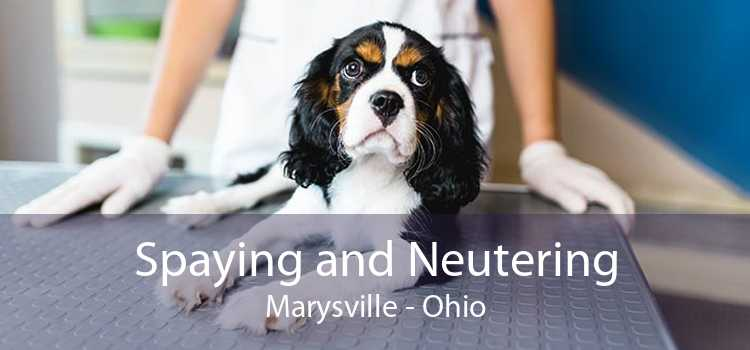 Spaying and Neutering Marysville - Ohio