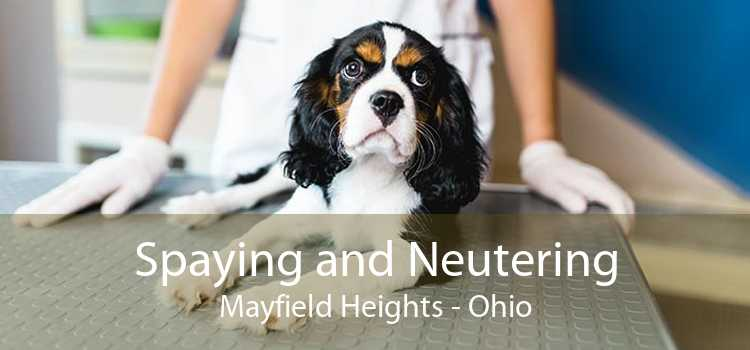 Spaying and Neutering Mayfield Heights - Ohio