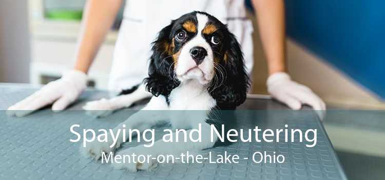 Spaying and Neutering Mentor-on-the-Lake - Ohio