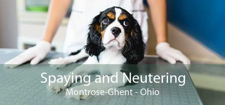 Spaying and Neutering Montrose-Ghent - Ohio