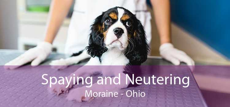 Spaying and Neutering Moraine - Ohio