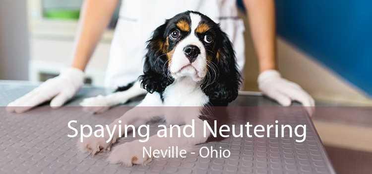 Spaying and Neutering Neville - Ohio
