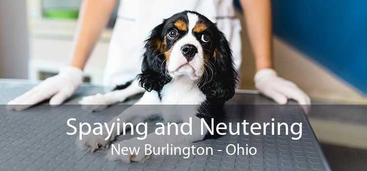 Spaying and Neutering New Burlington - Ohio